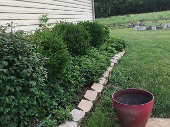 house-springs-side-garden