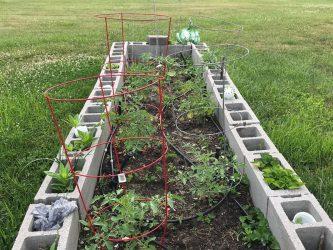 house-springs-veggie-garden